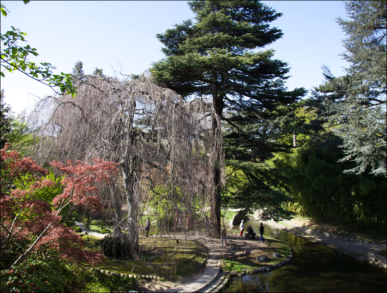 Albert Kahn garden, March; pic: Steve Sampson